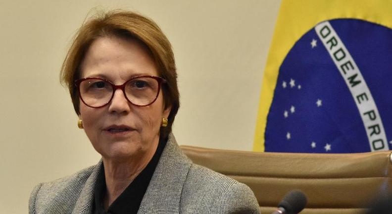 Ministra defende não usar verba para reflorestar: ela se regenera sozinha