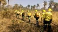 Ascema Nacional repudia retirada de brigadistas no combate ao fogo nas florestas