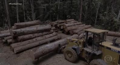 99% do desmatamento feito no Brasil em 2019 foi ilegal