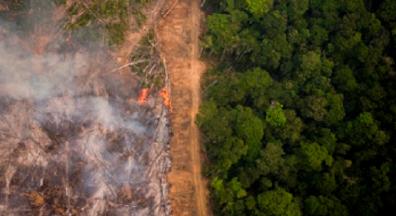 A destruição do meio ambiente pelo governo em três atos