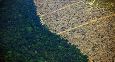 Desmatamento na Amazônia cresce 34% no período de um ano, indicam dados do Inpe