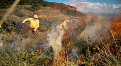O meio ambiente brasileiro só ficará seguro sem Bolsonaro na Presidência