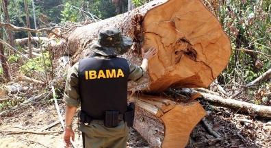 Pane no Ibama impede armazenamento de ao menos 3.000 multas