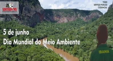 #SintsepMSnaLuta: Dia Mundial do Meio Ambiente